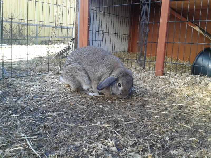 16 mars kanin