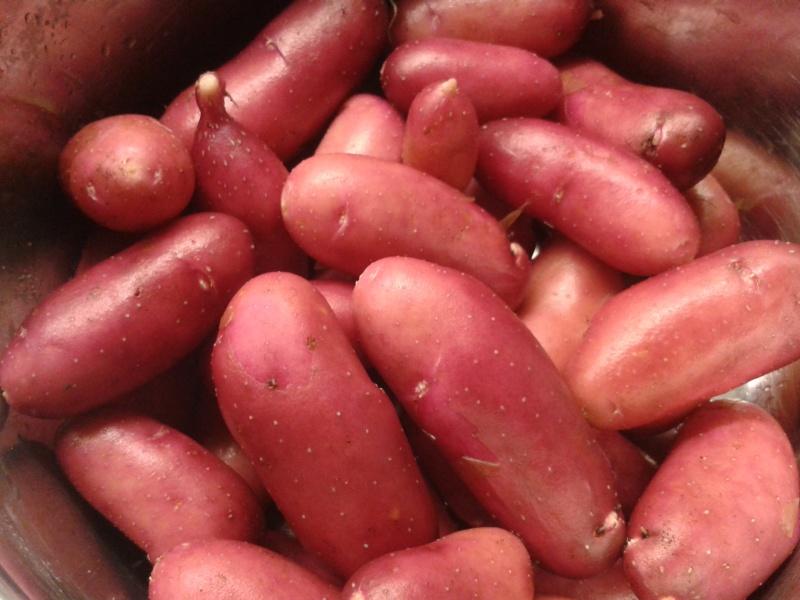 06 24 potatis
