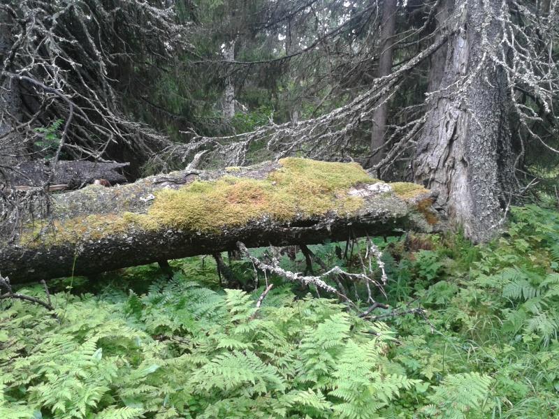 20160728 regnskogsfjäll