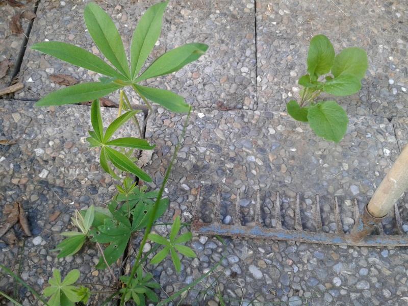 juli trädgård 14